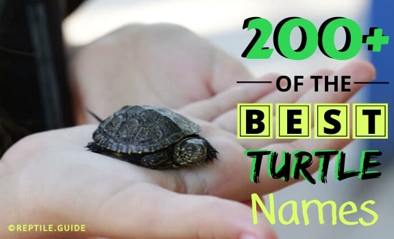 best pet turtle names