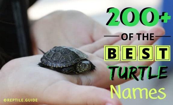 best pet turtle names