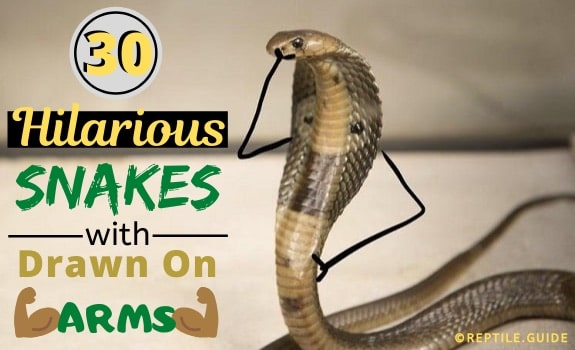 snakes with drawn on arms