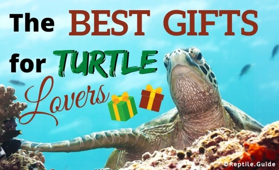 Best Gifts for Turtle Lovers