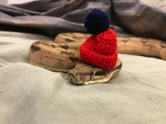 Snake With Hat 10