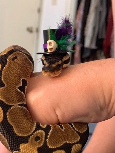 Snake With Hat 11
