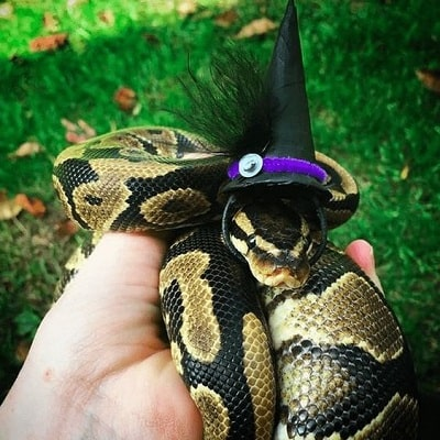 Snake With Hat 13