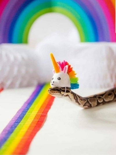 Snake With Hat 15