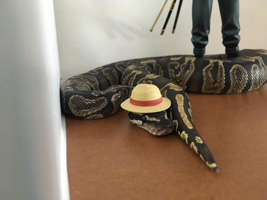 Snake With Hat 17