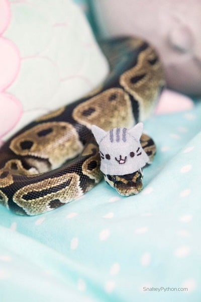 Snake With Hat 20