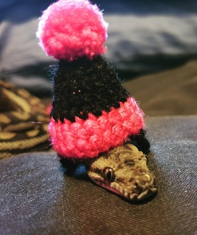 Snake With Hat 21