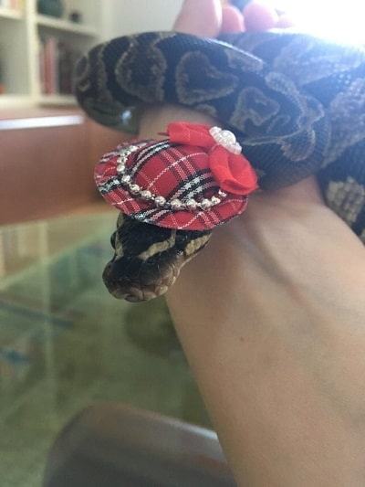 Snake With Hat 23
