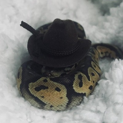 Snake With Hat 24