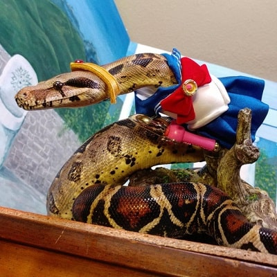 Snake With Hat 5