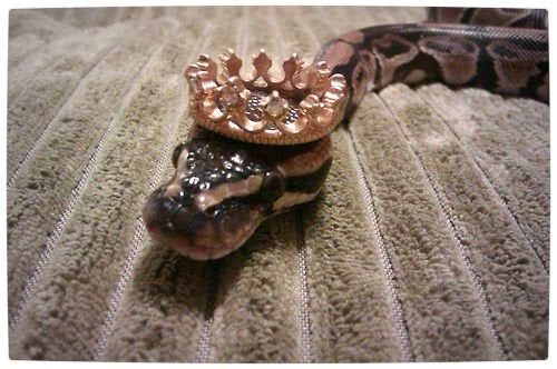 Snake With Hat 6