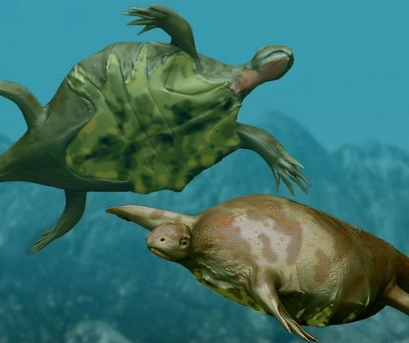 Closest Visual Example of Turtles Without Shells