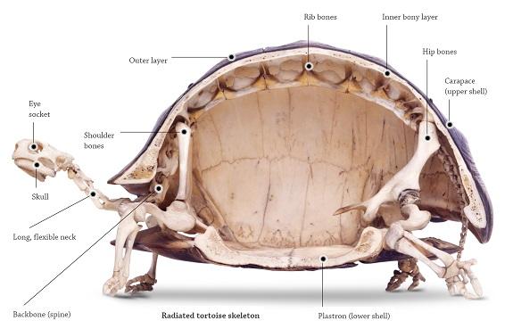 Inside Tortoise Shell