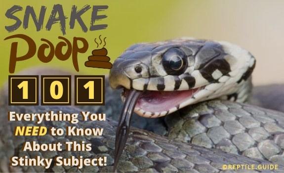 Snake poop