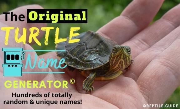 Turtle name generator