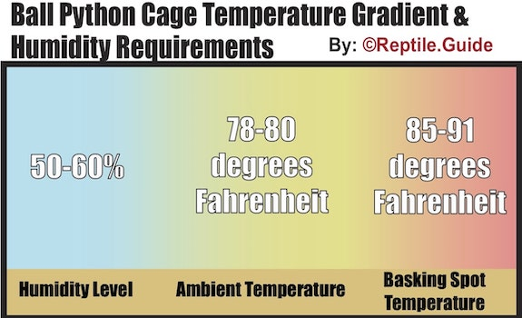 ball python temperature gradient and humidity levels