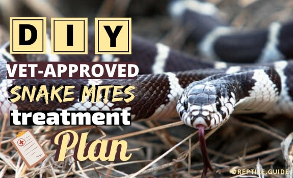 snake mites treatment