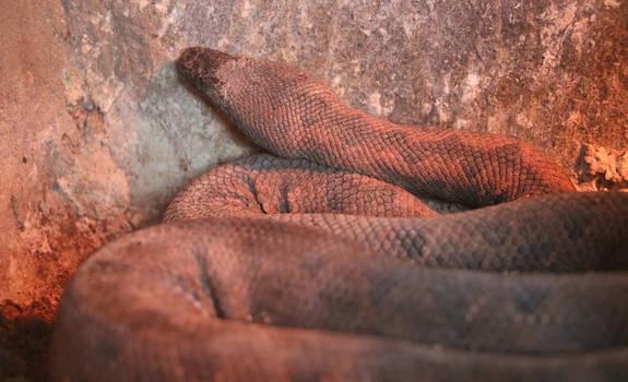 viper boa
