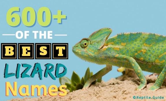 Best Pet Lizard Names