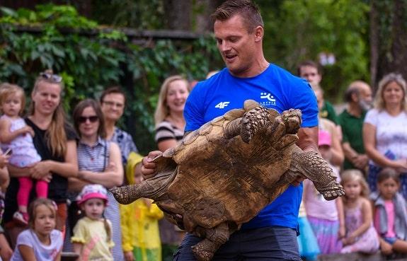 Handler Picking Up African Sulcata Tortoise