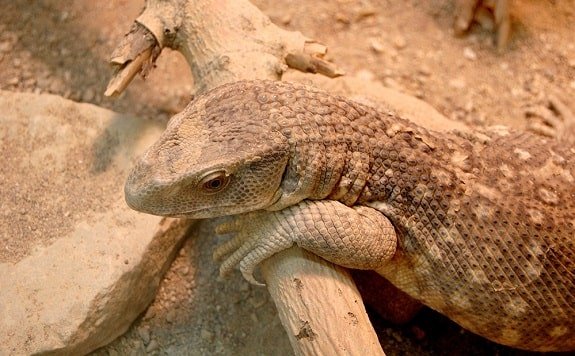 Savannah Monitor Humidity Requirements