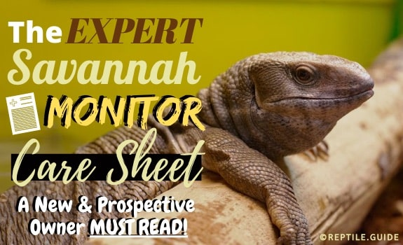 Savannah monitor care