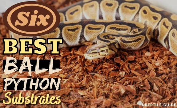 ball python substrate