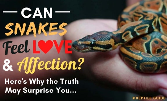 can snakes feel love