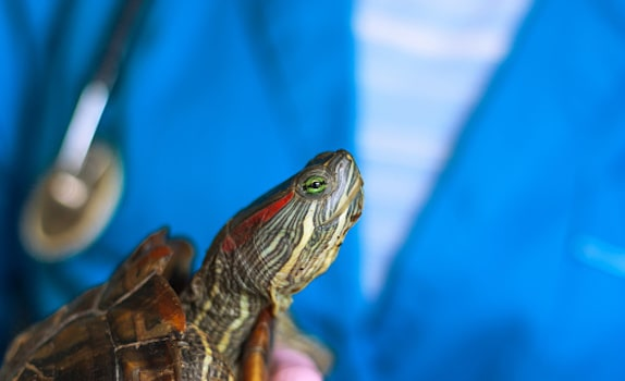 red eared slider health concerns