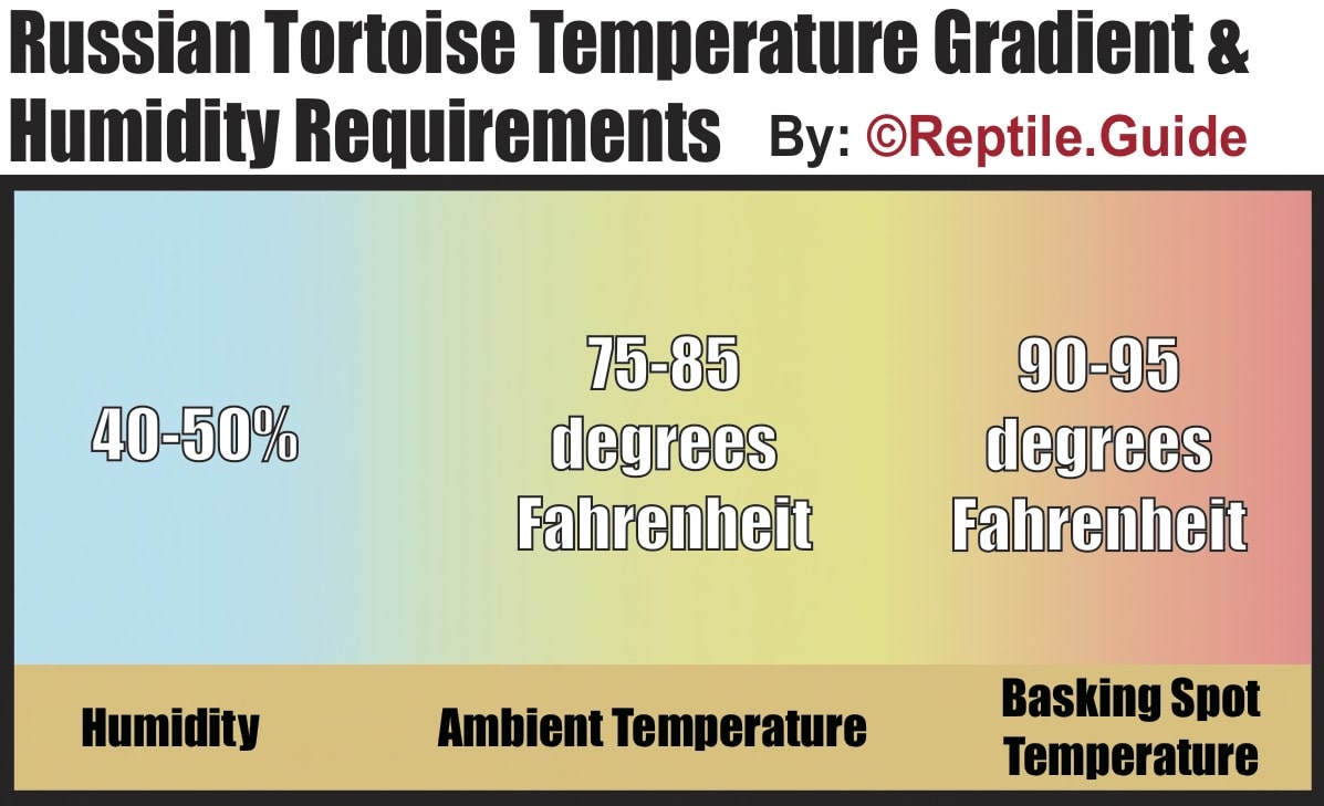 russian tortoise temperature and humidity