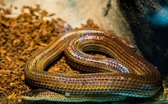 Sunbeam Snake Habitat Tank Setup