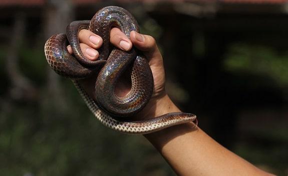 Sunbeam Snake Handling Bonding