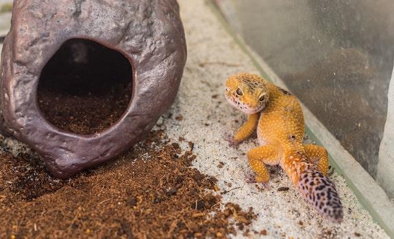 leopard gecko glass enclosure