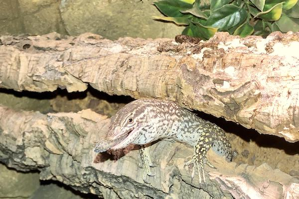 Ackie Monitor Diet