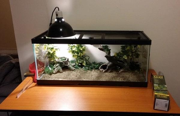 Glass Reptile Enclosure