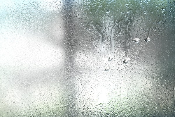 Brazilian Rainbow Boa Humidity Requirements