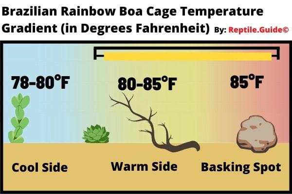 Brazilian Rainbow Boa Temperature Chart