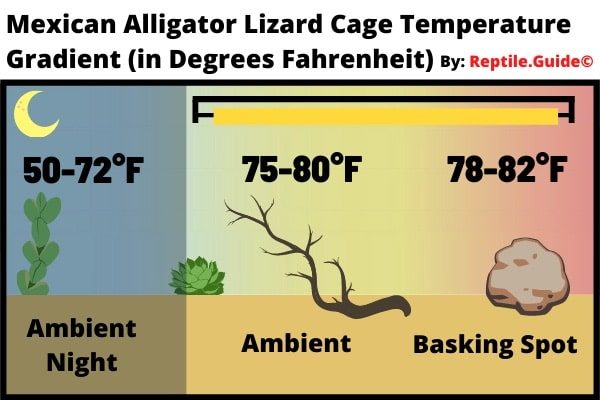 Mexican Alligator Lizard Temperature chart