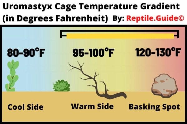 Uromastyx Cage Temperature