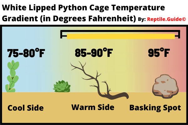 White Lipped Python Cage Temperature Gradient Chart