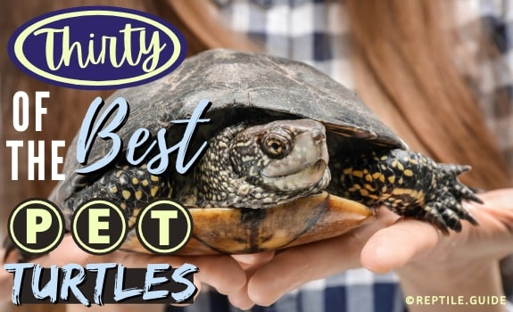 Best Pet Turtles