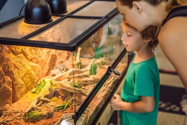 Mother and son watching ball python