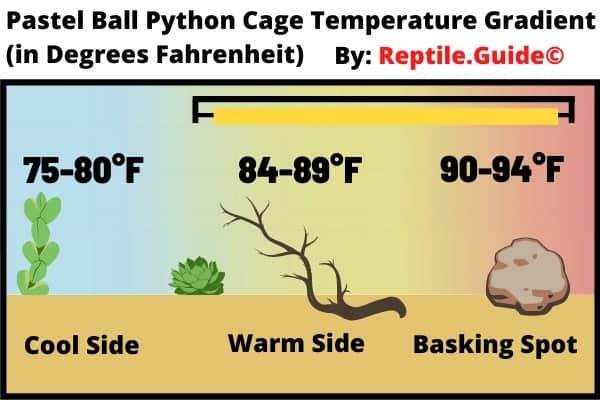 Pastel Ball Python Cage Temperature