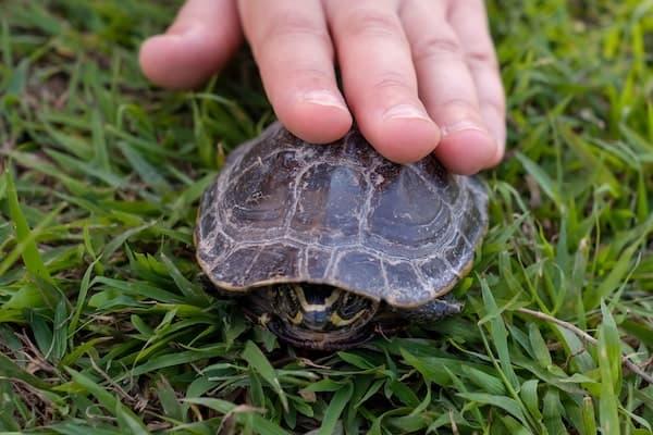 turtle exploring outside