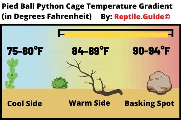 Pied Ball Python Enclosure Temperature Chart