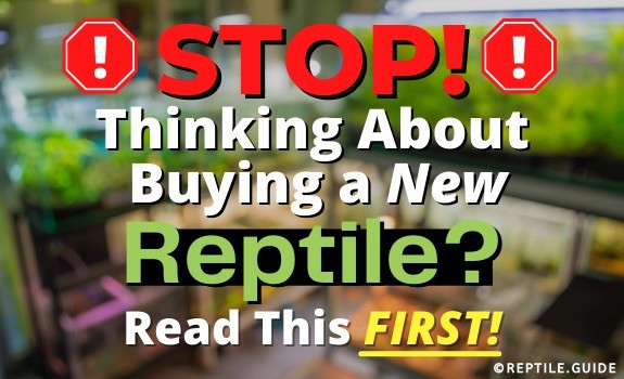 Buying a Reptile xyz reptiles landing page featured image