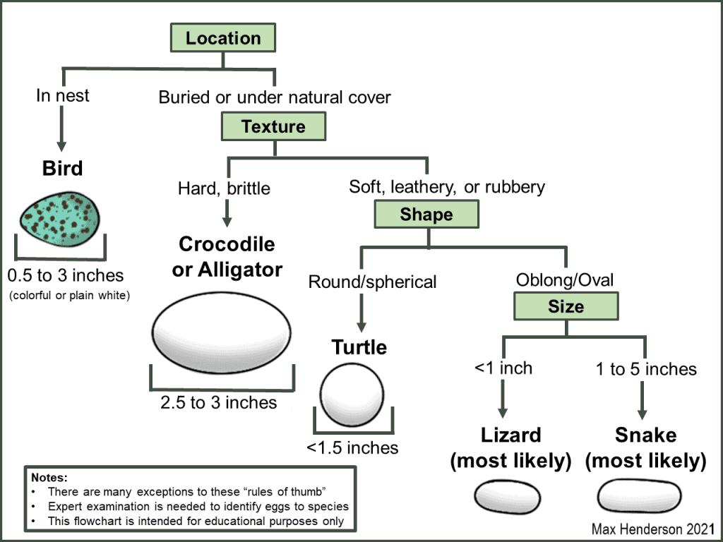 Egg comparison flow chart