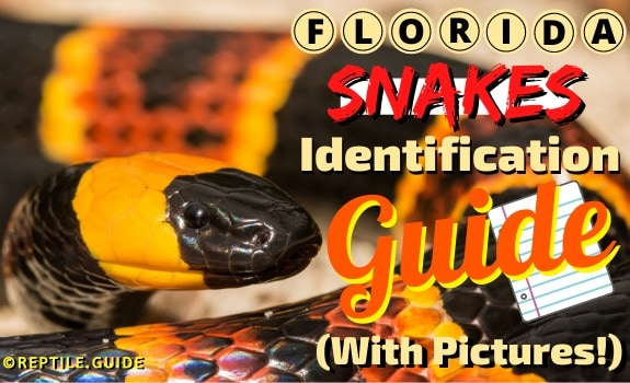florida snakes featured image