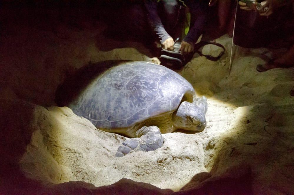 Turtle hatchery on the Selingan island