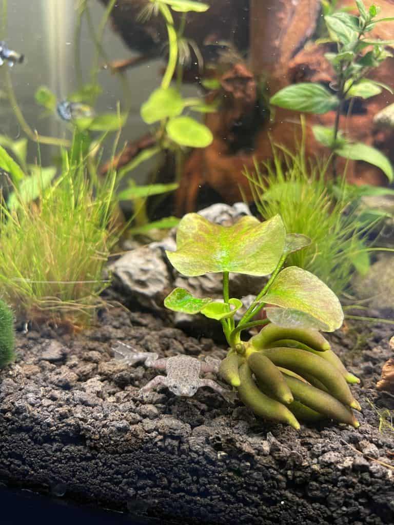 Typical Aquarium